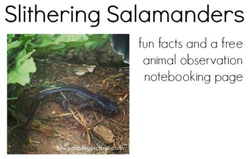 Slithering Salamanders [a K-Learner Link-up]