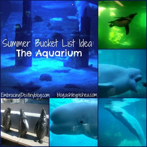 Going to the Aquarium   a Summer Bucket List idea on ashleypichea.com