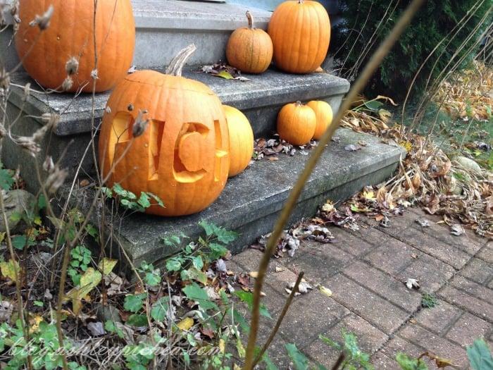 Pumpkin Carving with Kids - pumpkins on display