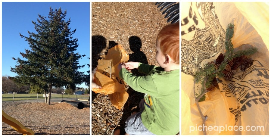 Collecting Pinecones | Counting with Pinecones - an nature and number exploration activity for toddlers and preschoolers